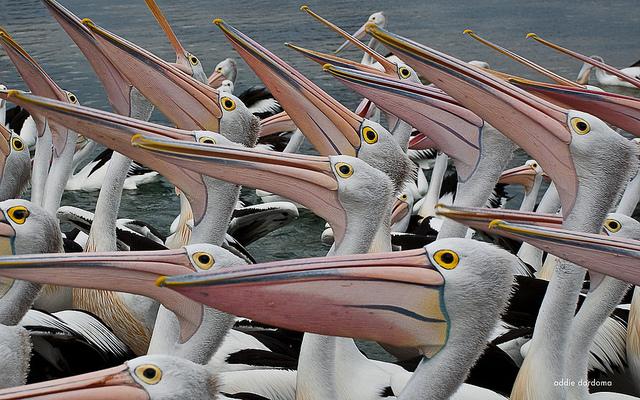 crowds of animals