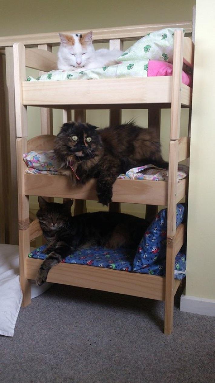 Как сделать для кошки постель