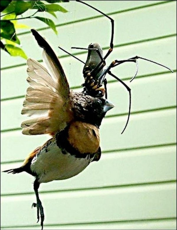 spider and bird